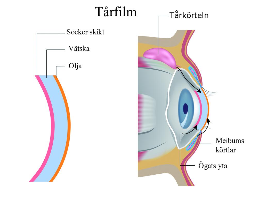 Tårfilmens komponenter